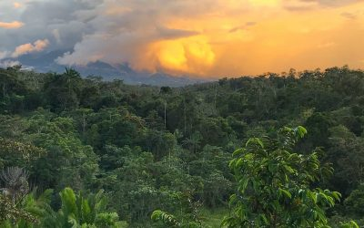 Voices of the Rainforest Brings Papua New Guinea to the Southwest