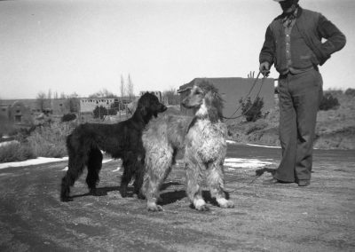 Afghan hounds with Kennels manager Alex Scott and the estate of Elizabeth and Martha White. The main building seen in the background was built by William Penhallow Henderson, 660 Garcia Street, Santa Fe, ca. 1930s. AC18 357bm026